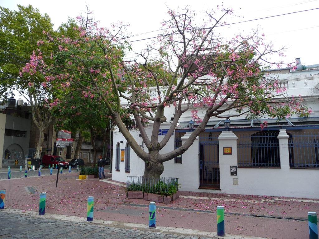 Buenos Aires - Quartiere Palermo - Alberi Fioriti